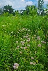 Meadow (wackybadger) Tags: wisconsin trempealeaurivermeadowsna sna346 nikon wisconsinstatenaturalarea buffalocounty