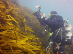 18 July 2016 - Scillies Trip PICT0203 (severnsidesubaqua) Tags: scillies scilly scuba diving