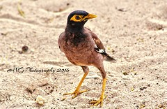 Koh samui Bird (Adeline Govi N) Tags: bird curieux nice thailand koh samui