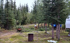 Life in the wilderness . . (JLS Photography - Alaska) Tags: alaska alaskalandscape homestead docdoolittle work landscape outdoor trees cabinlife clearingland jlsphotographyalaska forest tree
