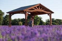 Mayfield Lavender, Surrey. (Mr Justin Jim) Tags: mayfield lavender field surrey uk united kingdom canon 5d mark iii 24105mm summer sun bokeh purple flowers nature