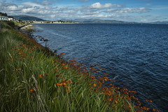 Flowers on the Shoreline - Dunoon Sept 2016 (GOR44Photographic@Gmail.com) Tags: dunoon argyle bute scotland cowal water sea firthofclyde gor44 cloud fujifilm xpro1 xf18mmf2 18mmf2 green flowers coast