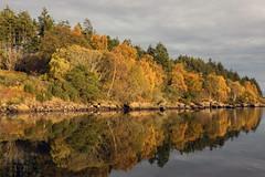 Loch Fleet (Dibbly Dobbler) Tags: sonyrx10iii loch fleet autumn colours reflections
