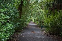 Waipuoa Forest-6