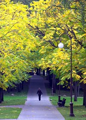 Fall is coming (zeandroid) Tags: fall walking leavis yellow path tres grass greengrass bench park person woman