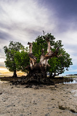 20160919-Panay90441 (justbry16) Tags: brianmarkbarqueros brian mark barqueros justbry16 justbry justbry16gmailcom travelwithbry traveledminds travel travelphotography traveled traveler philippines philippinestourism photography philippinebeach isladegigantes iloilo gigantesisland panay panayisland panayregion visayas sunrise micro43 microfourthirds micro43s micro m43s bestm43lens fourthirds 43smicro 43rds itsmorefuninthephilippines beach island beautiful