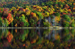 The embrace of Nature (Captions by Nica... (Fieger Photography)) Tags: reflections reflection water landscape lake leaves trees tree forest fall foliage autumn nature colorful colors outdoor branches bright serene