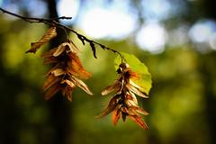 IMG_2752 (sabine5235) Tags: herbst wald outdoor grn pflanzen bume busch