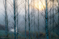 Usvaa. Mist. (vesa.perho) Tags: abstract outdoor forest landscape finland serene texture 500v20f
