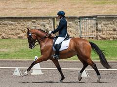 161023_Aust_D_Champs_Sun_Med_4.2_6170.jpg (FranzVenhaus) Tags: athletes dressage australia siec equestrian riders horses performance event competition nsw sydney aus