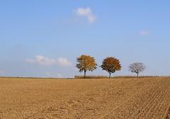 Autumn trees (Xtraphoto) Tags: germany deutschland bayern bavaria landscape landschaft sky blue blau himmel acre acker feld field colors baum bume tree trees autumn herbst