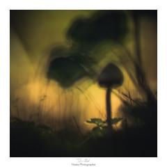 La vie est une suggestion (Naska Photographie) Tags: naska photographie photo photographe paysage proxy proxyphoto musique champignon forest fort nature extrieur bokeh color couleur macro macrophotographie macrophoto abstrait ambiance