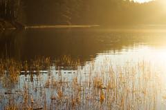 Wonders (Ludvius) Tags: lake nature norway landscape wonders sørlandet lillesand austagder kaldveld ludovicophotography wwwludovicophotocom