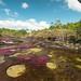 Paisaje del río colombiano Caño Cristales