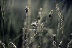 Yay,Its Bloom time (Vivek Sharma K) Tags: flowers 50mm evening bokeh blooming