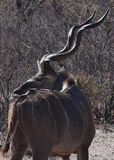 Botswana Hunting Safari 28
