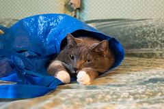 (19Cefa94) Tags: cats cat bag nikon 1855 borsa gatto gatti highiso sacco d5300