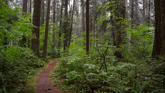 Forest After a Summer Rain (Geoff England) Tags: summer canada green leaves rain vancouver forest bc path columbia coquitlam british