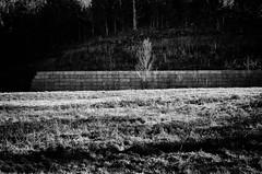 lone tree in winter (fallsroad) Tags: tree field wall pasture jenksoklahoma nikond7000