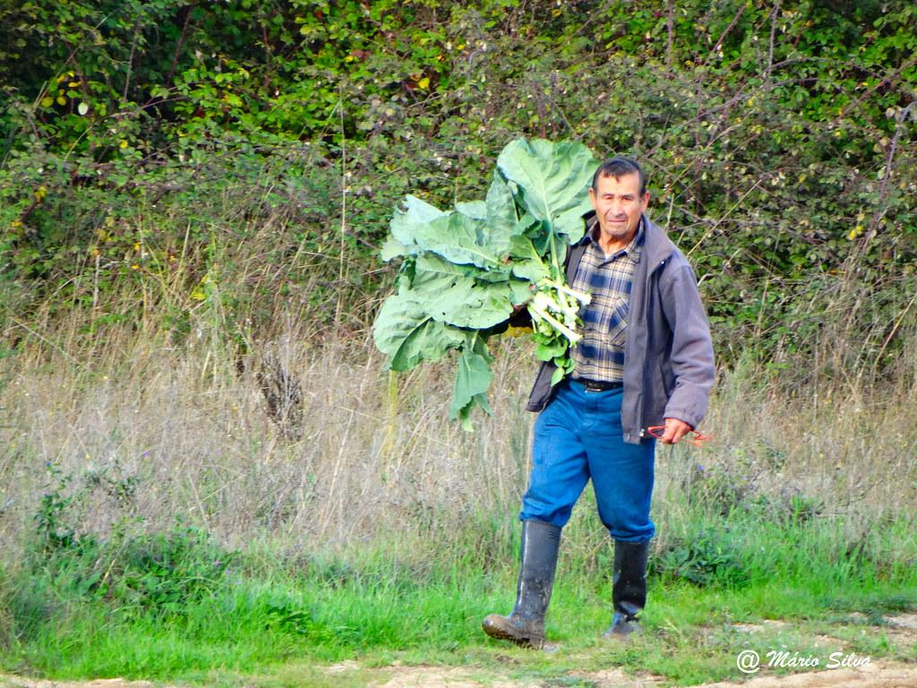 Águas Frias (Chaves) - ... caregando um belo ramo de couve galega ...