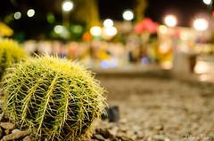 Cactcea (Lidia Chvez) Tags: naturaleza nature mxico night mexico lights nikon desert bokeh desierto aguascalientes espinas cactacea expoplaza d5100 nikond5100