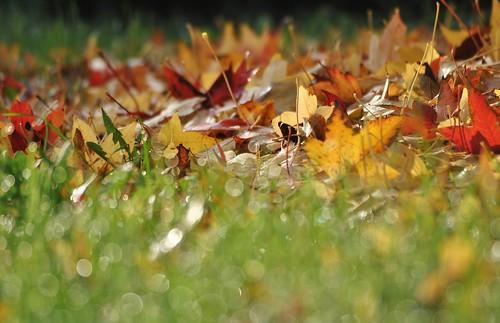 Autumn.26