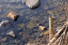 (  / Yorozuna) Tags: lake japan pile lakefront shiga biwako watersurface  makino  takashima lakebiwa        lakesurface      kaidu  woodenpile kaiduosaki