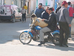 Sheep on Motorcycle Kairouan
