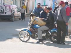 Sheep on Motorcycle Kairouan