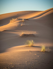 Merzouga 2 (Mariasme) Tags: sand desert dune morocco matchpointwinner 15challengeswinner gamesweep thepinnaclehof kanchenjungachallengewinner pregamesweep mostlyonecolour landscapeinportraitorientation mpt417 tphofmarch2015