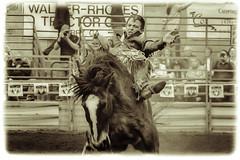 Bareback Riding (abrwr) Tags: horse cowboys canon bareback cowboy action rodeo rider bronc febuary laidback cowboyboots t3i 2015 broncrider buckingbronco perryga gnfa 02212015 ganationalrodeo2015 amandalbrewer