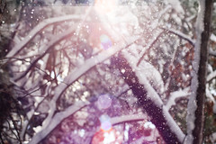 ({corinne}) Tags: winter snow digital forest woods magical sunflare canoneosxti february2010 70300mmf35