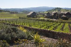 Vineyards and Mansion along the Silverado Trail (uncle.dee9600) Tags: vineyard napavalley mansion silveradotrail