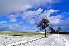 Snow on the fields (Tobi_2008) Tags: schnee winter sky snow tree field clouds germany landscape deutschland saxony feld himmel wolken ciel sachsen landschaft allemagne arbre baum diamondclassphotographer flickrdiamond