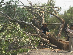 Tree Blocking Road Laos