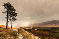 Sheffery Pass (Colin Redmond) Tags: ireland clouds photoshop landscape valley mayo westport cloudporn lightroom westofireland mayophotographicclub woodtreesbarkscaryleavesshaderowsgrassforestcopsevanishingpointperspectivedistancefunnelbranchescountrysidewoods shefferypass