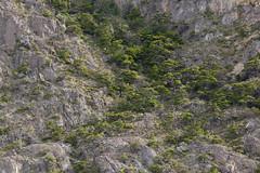 Trees on the shore of Lago Argentino, Patagonia, Argentina (maxunterwegs) Tags: patagonia santacruz tree argentina argentine patagonie baum argentinien patagonien