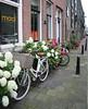 dutch pushbikes (58) (bertknot) Tags: bikes fietsen fiets pushbikes dutchbikes dutchpushbikes