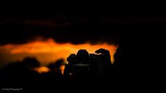 DSC_0237 (timmie_winch) Tags: nikon nikond3000 d3000 august august2016 2016 sun sunset sunsetsuffolk sunsetoversuffolkcountryside sunsetovercornfields sunsetovercornfield silhouette 18105mm 18105vr nikon18105mmvrlens shadows golden goldenhour goldenlight elliedunn ellie eleanordunn ells eleanor ellsdunn dunn landscape landscapephotography landscapephotographer naturephotographer naturephotography nature portrait portraitphotography portraiture portraitphotographer portraiturephotography portraiturephotographer portraitofaphotogragher portraitofaphotographer timwinchphotography tim timwinch winch debenham ip14 suffolk