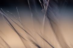 LA DOUCEUR DU MATIN (zventure,) Tags: alpesmaritimes abstrait aube abstract arbres bordsduvar brindilles branches buissons cach couleurs saintlaurentduvar soleil sable dawn dor dcor extrieur fil flou fort fleuve flore gold hautelumire