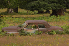 This is the Story of Victoria Lee (Dex Horton Photography) Tags: victorialee roadtrip car rust broken brokedown weeds 2016 summer exploring washingtonstate bestof dexhorton northcascades nationalpark