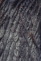Bark II (ChrisDale) Tags: wood detail tree texture closeup dark wooden treetrunk bark scales trunk treebark rough textured barktexture chrisdale chrismdale