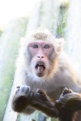 2016 北海道D6 4x6 3255 (chaochun777) Tags: 北海道 旭山 動物園 露營 自由行 猴子 長臂猿 猩猩 雲豹 花豹 老虎 獅子 北極熊 企鵝