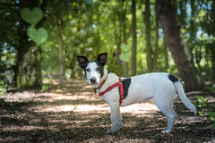 Walk in the Woods-1 (d3max) Tags: 5dmk3 canine canon charity dogs martinhillphotography rehoming rescue volunteering woodgreenanimalcharity