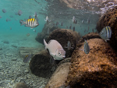 School (spencer_r_allen) Tags: olympus tg4 tough islamujeres quintanaroo mexico mx travel vacation island ocean water underwater snorkel swimming fish garrafon