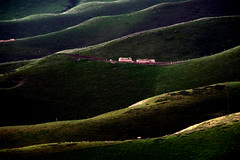 Body-curve hill slopes   (MelindaChan ^..^) Tags: xiangjiang china    hill curves light slope grassland prairie cattle bodycurve