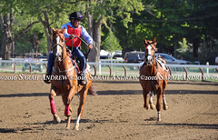 Some unexpected excitement when a horse gets loose at Saratoga on Weds morning (Rock and Racehorses) Tags: webloosehorsesaratogaoutriderpage2ska8098sarahandrew loose horse saratoga outrider ny thoroughbred racehorse nyra