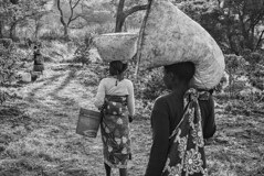 Coffee-Pickers-Returning,-Tanzania-2015
