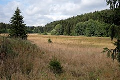BRAUNLAGE - MOUNTAIN PRAIRIE (Punxsutawneyphil) Tags: europa europe deutschland alemania germany deutsch german harz mittelgebirge prairie bergwiese nature natur landscape landschaft bume mountains trees fichte braunlage gras grass sommer summer niedersachsen lowesaxony bajasajonia