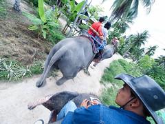 20160929-P9290242 (j12oppa) Tags: elephanttracking pattaya thailand elephants 코끼리트랙킹 파타야 태국